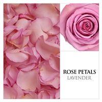 lavender roses petals, online flowers, flowers delivery, wedding flowers, wholesale flowers, DIY