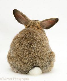 bunnie in timeout