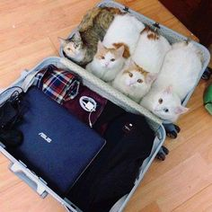 Remember to only pack essentials when going on vacation. Just so you don't forget we are coming with you
