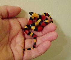 뱀 사육단계별 종류