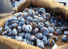 Roasted chestnuts sold in the winter in the Streets of Lisbon and Porto Yummy