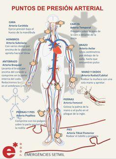 Infografia. Puntos de presión arterial Medical Science, Medical School, Medical Care, Medicine Notes, Medical Anatomy, Nursing Notes, Med Student, Body Systems, Med School