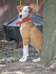 Isabelle ~happy and playful~: Hound, Dog; Conesus, NY
