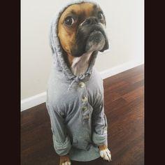 Cold puppy!