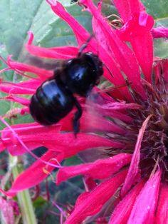 Pretty Bee in the DripWorks Demo Garden!