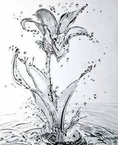 'Water' Lily by Paul-Shanghai on DeviantArt 3d Drawings, Amazing Drawings, Realistic Drawings, Pencil Drawings, Amazing Art, Realistic Flower Drawing, Water Drawing, Water Art, Painting & Drawing