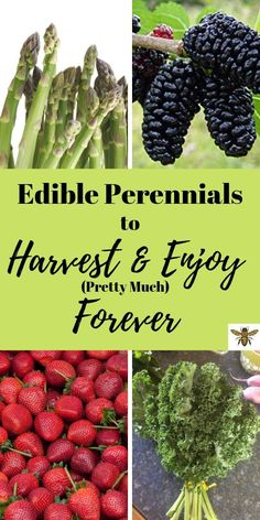 """""""Edible Perennials to Harvest and Enjoy (Pretty Much) Forever"""" will help you to build that sustainable garden that will feed your family for many years! Edible Perennials to Harvest and Enjoy (Pretty Much) Forever"""