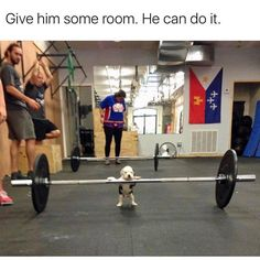 """Funnowtime, Social Fun Platform We share in funny pictures and funny animals categories while sharing while """"Random Funny Animal Pictures Of The Day - 22 Pics"""". Funny Animal Memes, Dog Memes, Funny Animal Pictures, Cute Funny Animals, Funny Cute, Really Funny, Funny Dogs, Funny Memes, Dog Funnies"""
