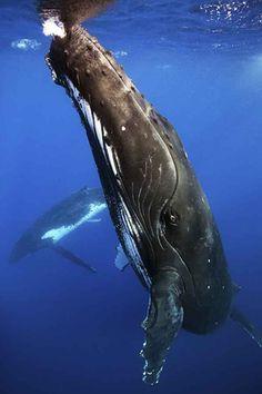 2013 Underwater Photography Contest Finalists | Scuba Diving