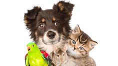 Pauta - Portal Melhores Amigos :: Dezembro 2016 I COMO FAZER DENÚNCIA DE MAUS TRATOS OU ABANDONO DE ANIMAIS?