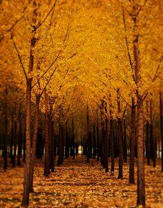 ✯ Yellow October