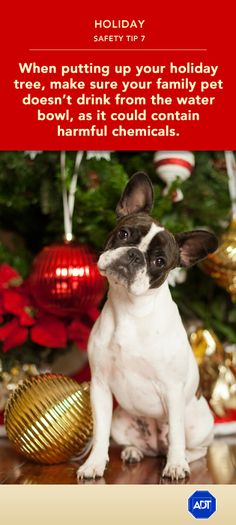 Holiday Safety Tip #7: When putting up your #holiday tree, make sure your family #pet doesn't drink from the water bowl, as it could contain harmful chemicals. Sincerely, ADT #staysafe  Get more safety tips to keep your pets safe in the ADT Learning Center.