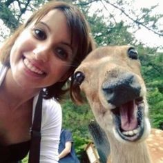 Funny pictures about Selfies Are Really Getting Out Of Control. Oh, and cool pics about Selfies Are Really Getting Out Of Control. Also, Selfies Are Really Getting Out Of Control photos. Funny Pictures Can't Stop Laughing, Funny Dog Pictures, Animal Pictures, Random Pictures, Animal Memes, Funny Animals, Cute Animals, Animal Facts, Wild Animals