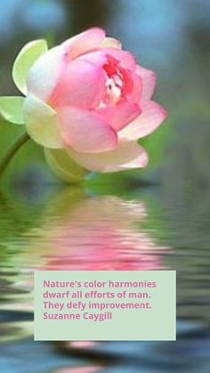 Seasonal Color Analysis, Color Harmony, Spring Nature, Season Colors, Halloween Crafts, San, Seasons, Rose, Flowers