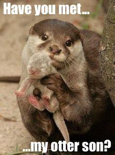 Okay, no more otter puns, I promise.