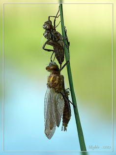 respect voor de schoonheid van de natuur, haar Schepper en de maakster van zulke prachtige foto's  http://jalbum.net/nl/browse/likes/album/1381349/user/1027130