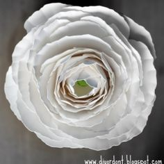 An ode to paper blooms & a fabulous DIY tutorial