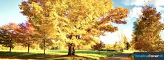 Yellow Tree Facebook Timeline Cover Hd Facebook Covers - Timeline Cover HD