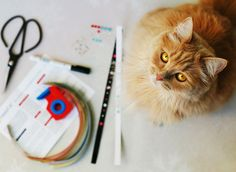 Cats, Animals, Paper, Diy, Crafting, Scratching Post, Ideas, Gatos, Animales