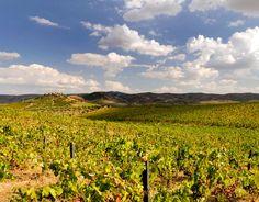 ORGANICALLY FARMED VINEYARDS | Altano