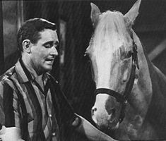 A horse is a horse,  of course of course.... and his name is Mr. Ed