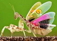 201 Best Praying Mantis Images Praying Mantis Beautiful Bugs Insects