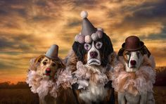 """Send in the Clowns"" Barbara Breitsameter,  M.Photog., Cr., CPP 1st Place Pets Grand Imaging Award Winner Team USA, World Photographic Cup"