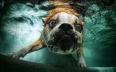 Su Altında Çekilmiş Sevimli Köpek Resimleri