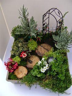 Studio Floral Dora Santoro: Mini Jardins em Vasos