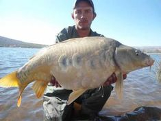 Image result for carp fishing in south africa