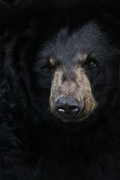 roadside-graves:    Black Bear