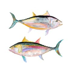 Hey, I found this really awesome Etsy listing at https://www.etsy.com/ru/listing/125846330/watercolor-fish-print-watercolor-tuna