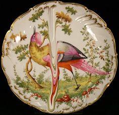 bird illustration with runs