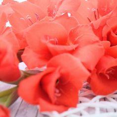 Ich lass euch heute zum Wochenstart einen lieben Blumengruß da. Kommt gut in und durch diese Woche.  Morgen gibts eine tolle Deko-Upcycling-Idee auf dem Blog. Ich freu mich auf euch  #dailydreamery #thatsdarling #blogger_de #prettylittleinspo #blogger_leipzig #diyblogger #mademyday #happygirl #flowers #flowerstagram #flowersofinstagram #flowersofig #blumen #blumengrüsse #gladiolen #blumenliebe #blumenmachenglücklich