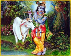 "✨ SHRI KRISHNA ✨ http://careforcows.org/ ""I offer my obeisances to Lord Krishna, who is the giver of pleasure to the cows, who is the Lord of the gopis and who is the embodiment of unlimited knowledge and the highest bliss.""~Gopala-tapani Upanisad"