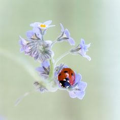 I very much like bugs & flowers, and the tiny details of each in photos...