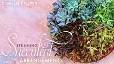 Make stylish container compositions with gorgeous succulents! Create bouquets, terrariums, wreaths and more.