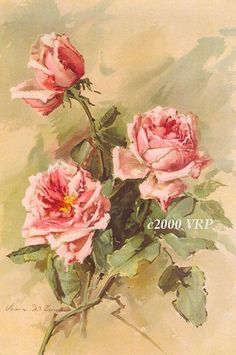 PRINT FREE SHIP Victorian Pink Cabbage by VictorianRosePrints, $11.99