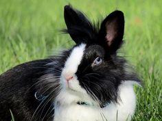 <3 #Rabbit  #Rabbits  #RabbitMerchandise  #RabbitAccessories  #RabbitFashions  #RabbitLovers  #ILoveRabbits  #Bunny  #ILoveBunny  #BunBun  #BunnyRabbits  #BunnyRabbit  #ILoveFox  #ILoveRabbit  #BunnyLovers  #FoxLovers  #FoxMerchandise  #FoxAccessories  #FoxFashions  #rabbitsofinstagram  #foxofinstagram  #FennexFox  #JudyHopp  #NickWilde  #Finnick  #Zootopia  #LopRabbit  #AngoraRabbit  #DutchRabbit  #DwarfRabbit