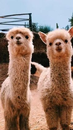 Soleagulla - Tiere Best Picture For Cutest Baby Animals ever For Yo Baby Animals Pictures, Cute Animal Pictures, Animals And Pets, Animal Pics, Wild Animals, Nature Animals, Anime Animals, Puppy Pictures, Cute Little Animals