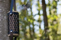 The design of this birdhouse helps Chickadees survive the winter | CONTEMPORIST