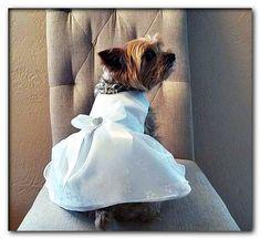 dog wedding favors Dog Wedding Attire, Dog Wedding Dress, Wedding Dresses, White Costumes, Pet Costumes, Dog Tuxedo, Headpiece, Wedding Favors, Bride