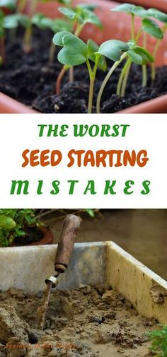 The worst mistakes I've made starting seeds. - Feathers in the woods