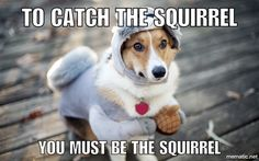 You must become the squirrel to find the squirrel