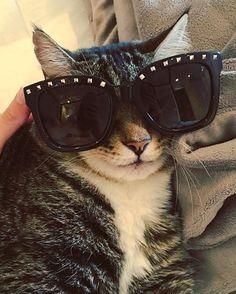 "Putting the ""stud"" in Rockstud. #eluxey #cateye #rockstud #swag #iputthestudinrockstud #style #fashion #shades #sunglasses #valentino #louisvuitton #mylouis #loulou #couturecat #cfo #cheiffelineofficer #brandbassador #luxury #rkoi #richcatsofinstagram #catsofinstagram #cats #luxe #luxelife #luxerevolution #frontrow"