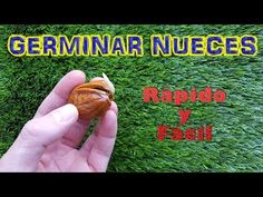 Fruit Garden, Fruit Trees, Bonsai, Grape Vines, Diy And Crafts, Funny Pictures, Youtube, Flowers, Gaia
