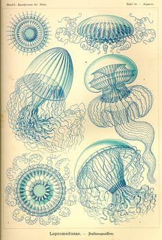 KUNSTFORMEN DER NATUR #jellyfish