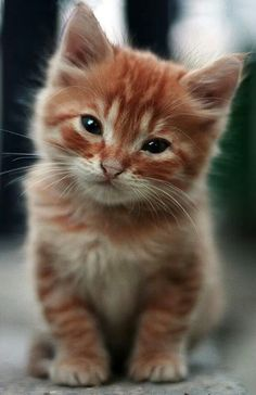 More orange kitten.