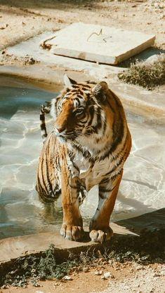 Mountain Sunset, Beachy Waves, Time Design, Bengal Tiger, Disney Films, Number Two, Sunset Photography, Sun Shade, Big Cats
