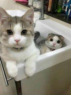 Let's bath http://ift.tt/2omjQJP